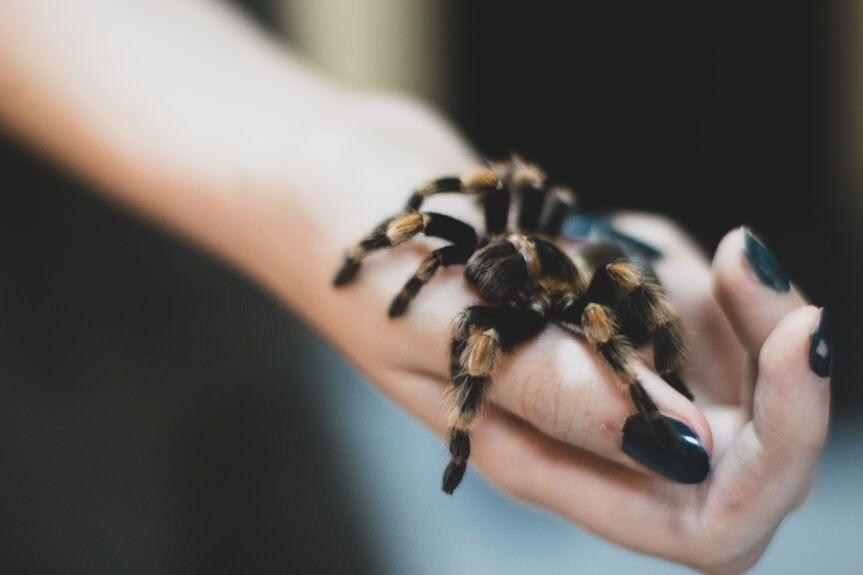 """Wystawa """"Fascynujący świat pająków i skorpionów"""" w Krośnie"""