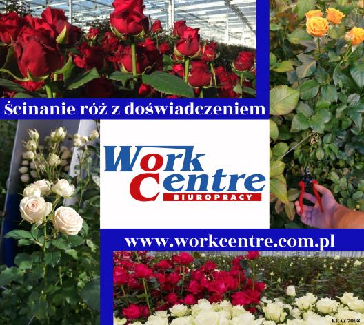 Praca przy różach