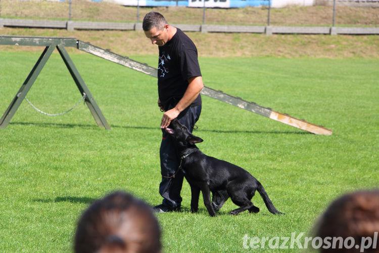 Pokaz wyszkolenia psów