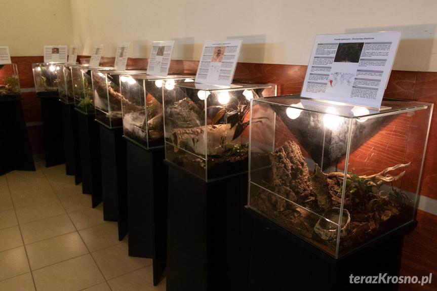 Wystawa żywych pająków i skorpionów w Krośnie