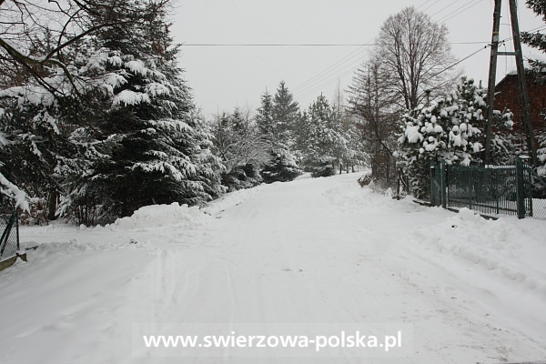 Zima w 2009 roku