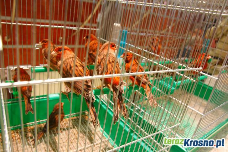 Wystawa ptaków w RCKP Krosno